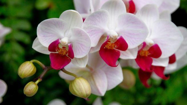 11-Bonitas-fotos-de-flores-naturales-11