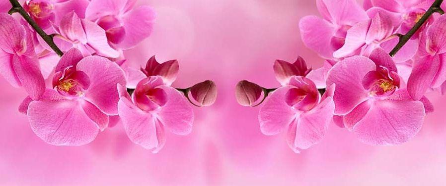 Ružová_tapeta_-_Orchidea_267.jpg.large_
